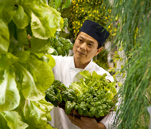 Chef Susumu Shibata in the O'Hare Urban Garden