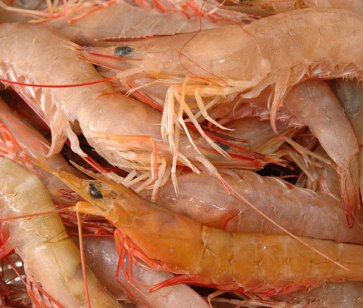 Triar Seafood will donate a percentage of red shrimp sales to the James Beard Foundation Silver Anniversary Scholarship Drive