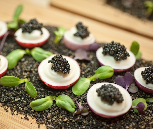 Spring Radishes with Cauliflower Butter and American Sturgeon Caviar