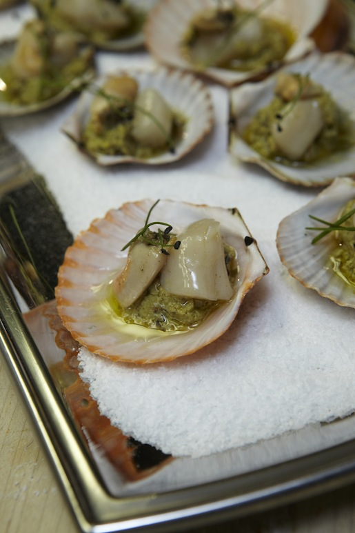 Pine-Scented Taylor Bay Scallops with Japanese Knotweed