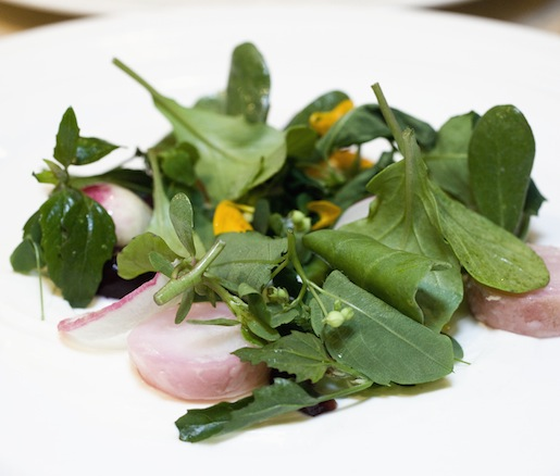 Heirloom Radish–Wild Greens Salad with Pickled Cherries