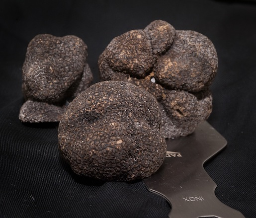 Black truffles await their destiny