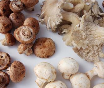... Mushroom and Roasted Garlic Bread Pudding | James Beard Foundation