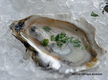 Chilled Oysters with Cucumber Water