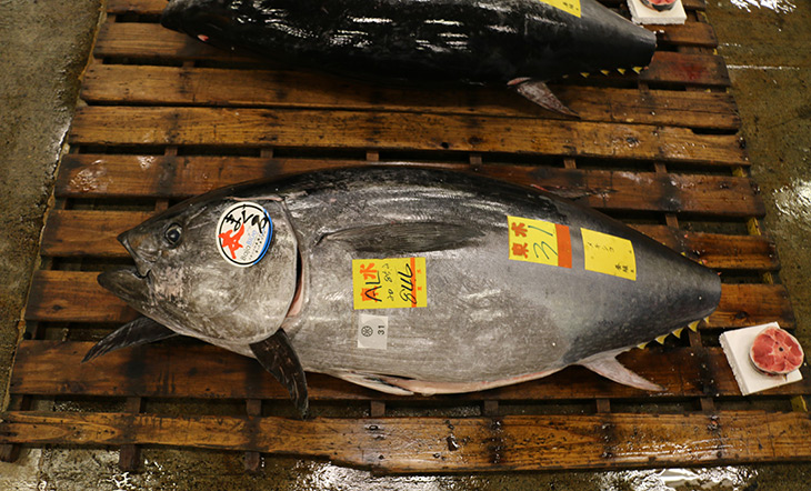 Bluefin Tuna being sold at Tsukiji Market (Tokyo, Japan) photo by Asian Seafood Improvement Collaborative