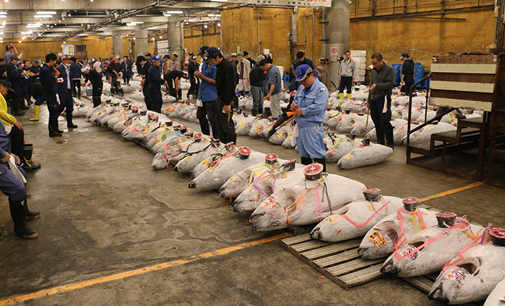 Bluefin tuna auction at the Tsukiji market photo Asian Seafood Improvement Collaborative